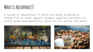 Seeds for the Soul 2- Aquaponics (1)